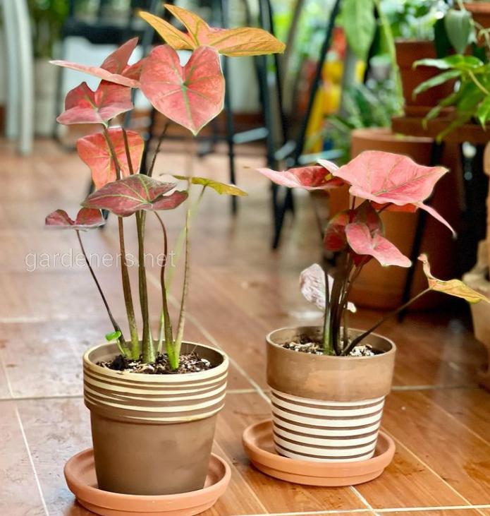 Как очистить комнатные растения: несколько интересных способов