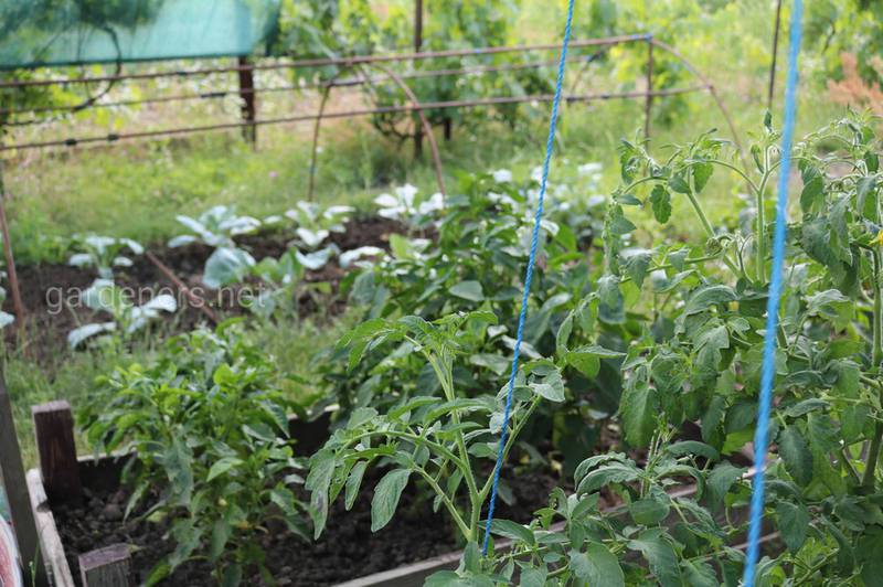 Чому овочеві культури не можна сіяти або садити кілька років на одному і тому самому місці?