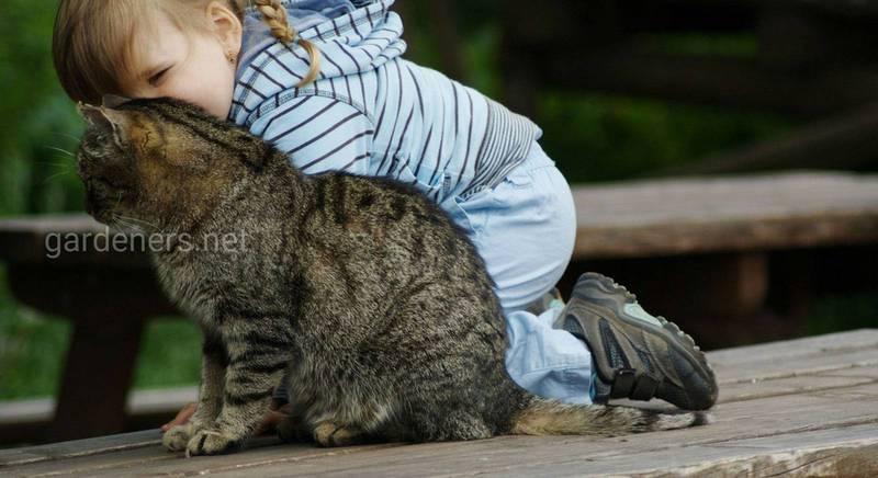 Токсокароз - заболевание, передающееся человеку от собак и котов.