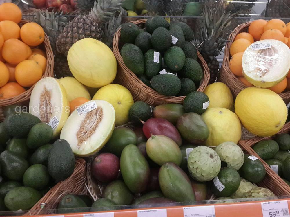 экзотические фрукты.jpg