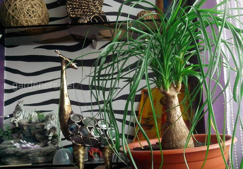 Какие комнатные растения самые простые в выращивании?