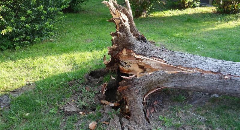 ТОП-7 идей использования выкорчеванного дерева или пня на участке