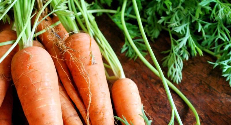 ТОП 6 поздние сорта моркови для хранения