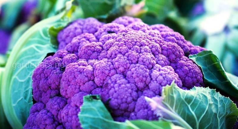 сорта овощей интересных цветов.jpg