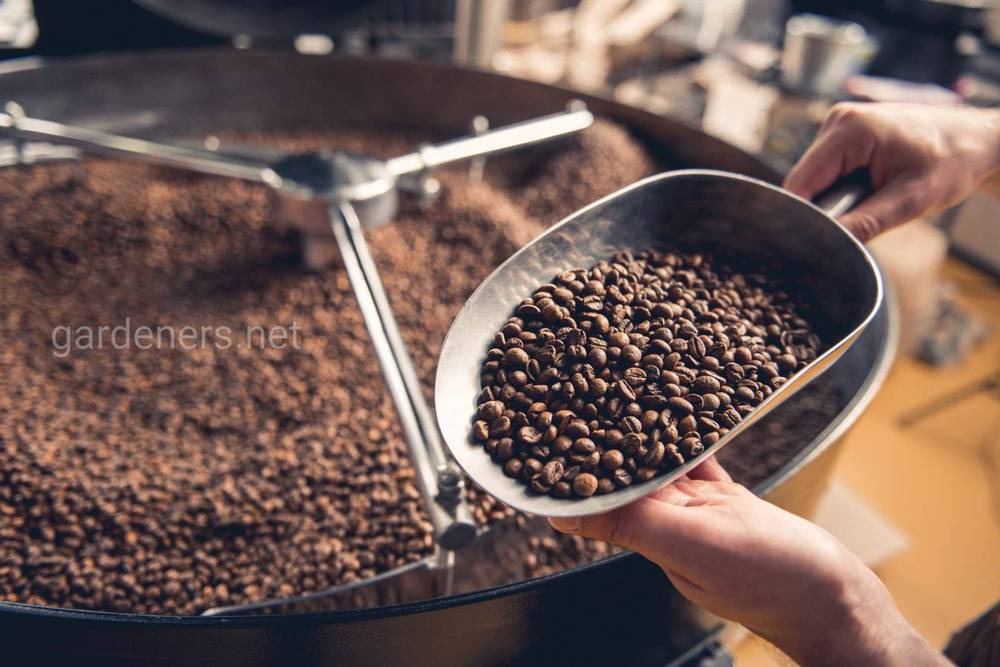 Вред, оказываемый кофеином на человека
