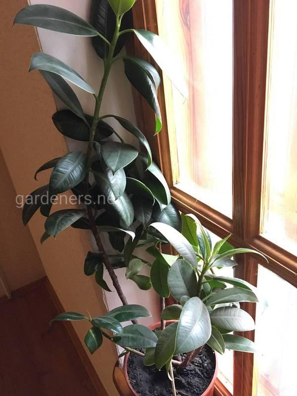Какие комнатные растения не требуют чрезмерного ухода?