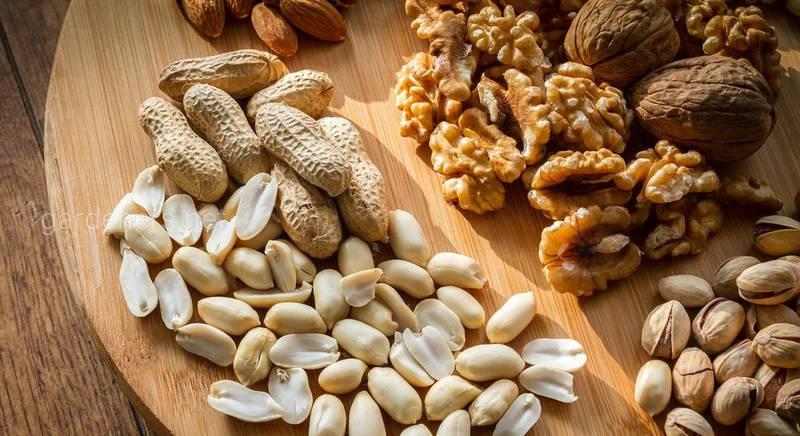 Как получить всю пользу от орехов, семечек и бобовых