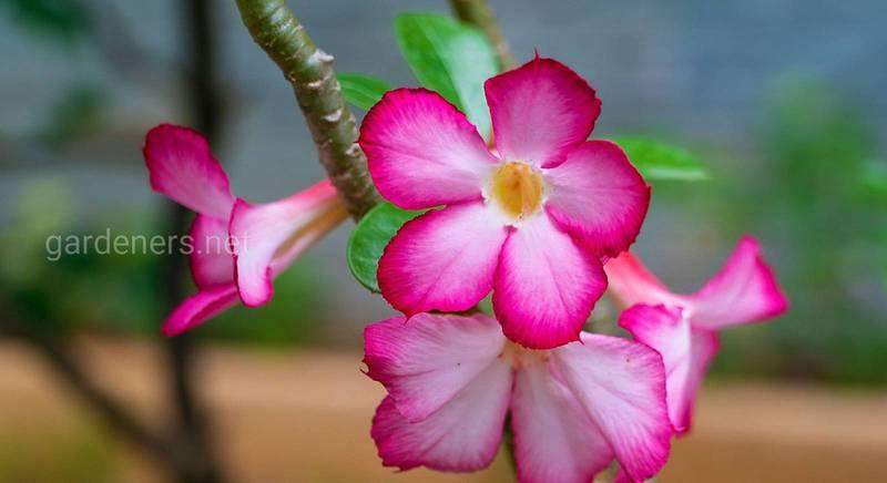 Какие летние и осенние цветы пододут для вашей террасы?