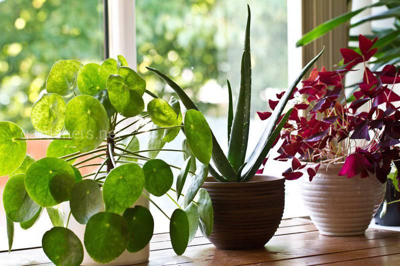 Кімнатні квіти взимку — дотримуйтесь цих порад, і ваші рослини будуть здорові