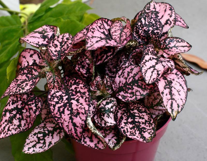 Пять наиболее устойчивых растений