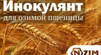 инокулянт для озимой пшеницы
