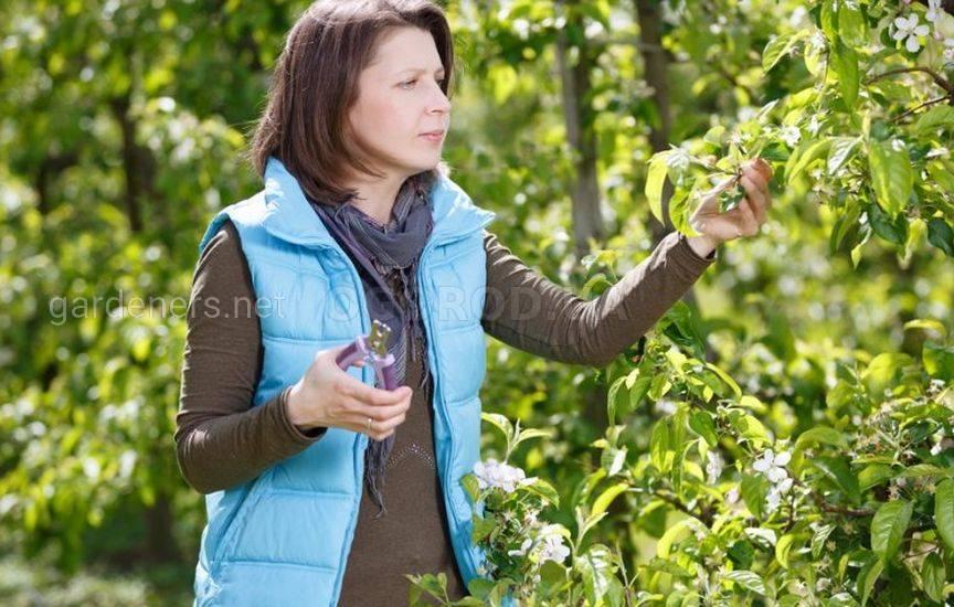 Как ухаживать за садом в июне