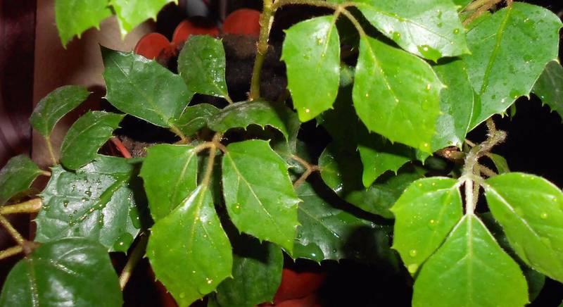 Банный день для комнатного растения, или как поддерживать чистоту листьев