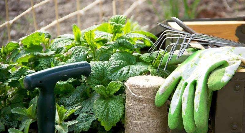 садовые работы 1.jpg