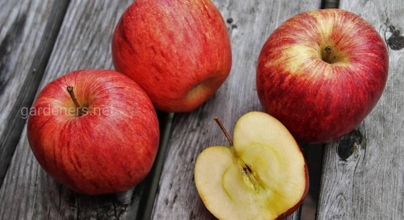 Зимостойкие сорта яблок