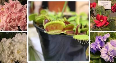 Яркая и красочная выставка фиалок и экзотических растений