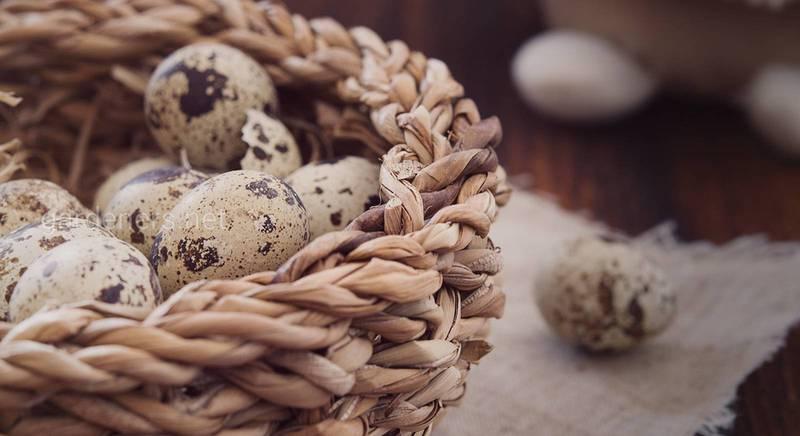 Вся правда о перепелиных яйцах: химический состав, польза и вред, способы применения