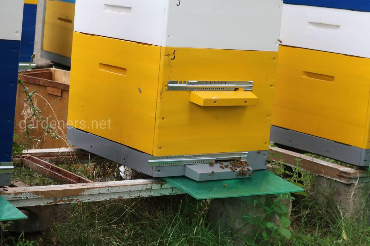 предроевое состояние пчел