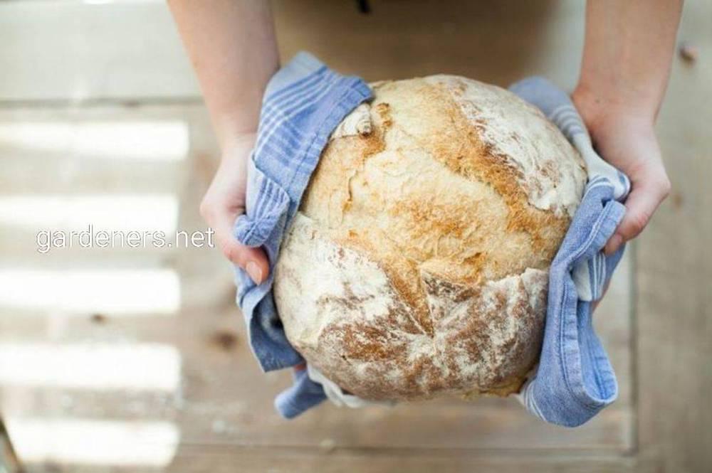 Что такое чага — рецепты и полезные свойства гриба