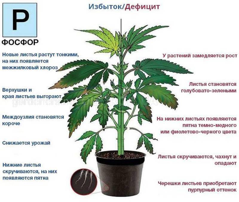 Азотные удобрения конопля курение марихуаны сужает или расширяет сосуды