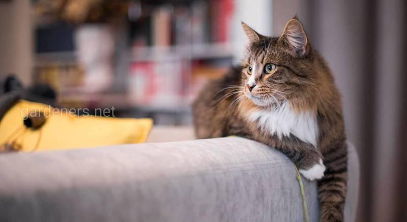 Чому коти скрізь ходять за своїми господарями, навіть до туалету?