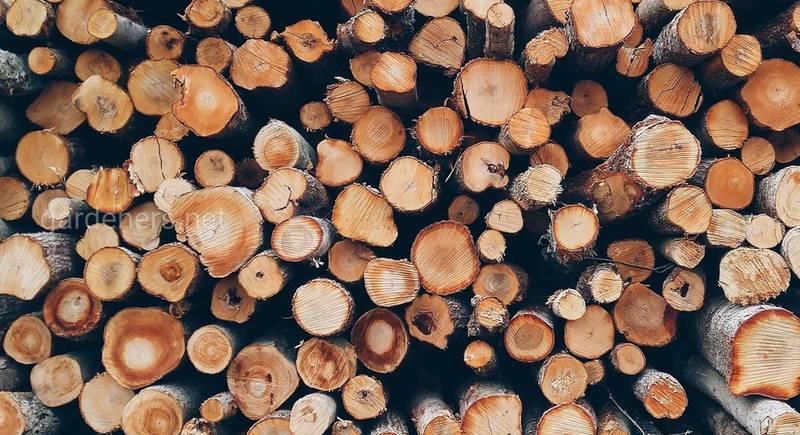 Правильный выбор дров