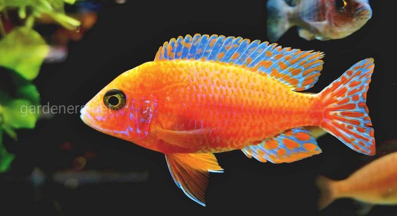 Что должен знать начинающий аквариумист