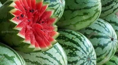 watermelons_green_ripe_fruit_food_stuff_ultra_3840x2160_hd-wallpaper-226308.jpg