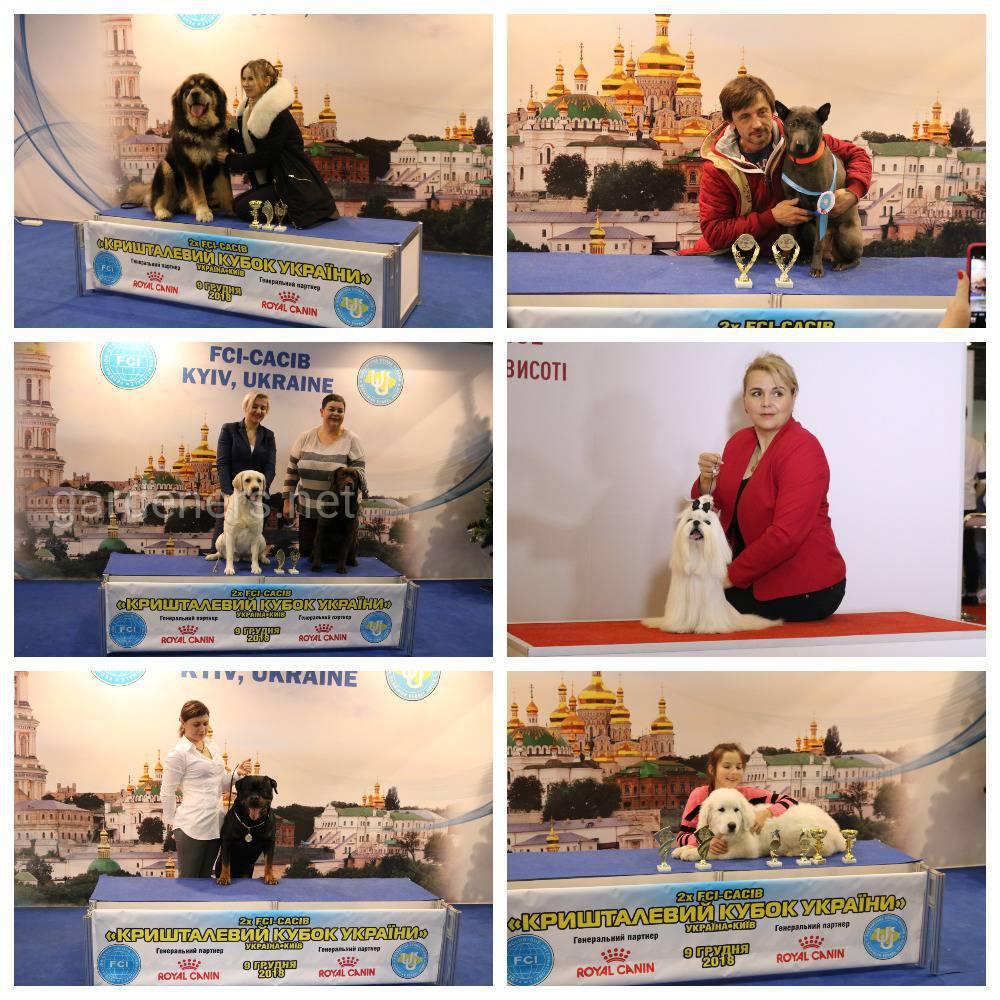 У Києві 8-9 грудня пройшли Міжнародні виставки собак усіх порід