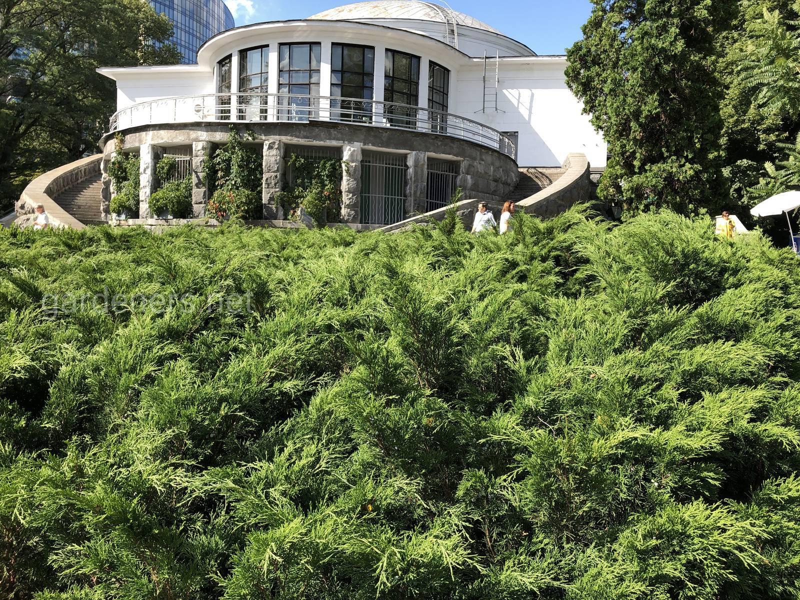 Ботанический сад им Филатова, Киев