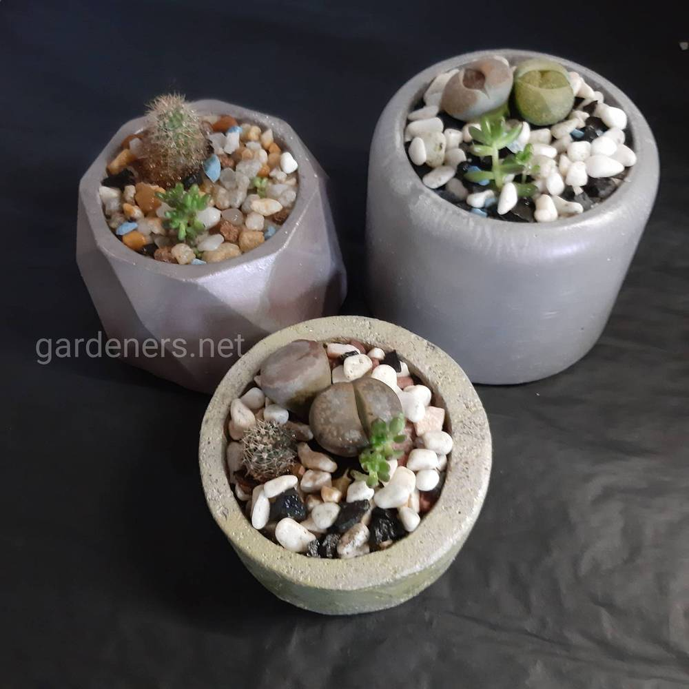 Сукуленти - не вибагливі і оригінальні рослинки