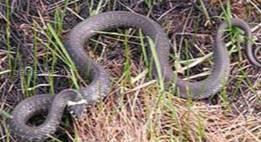 Интересный факт про змей.