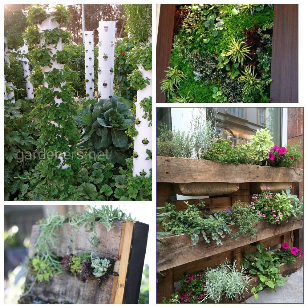 Растения для вертикального сада