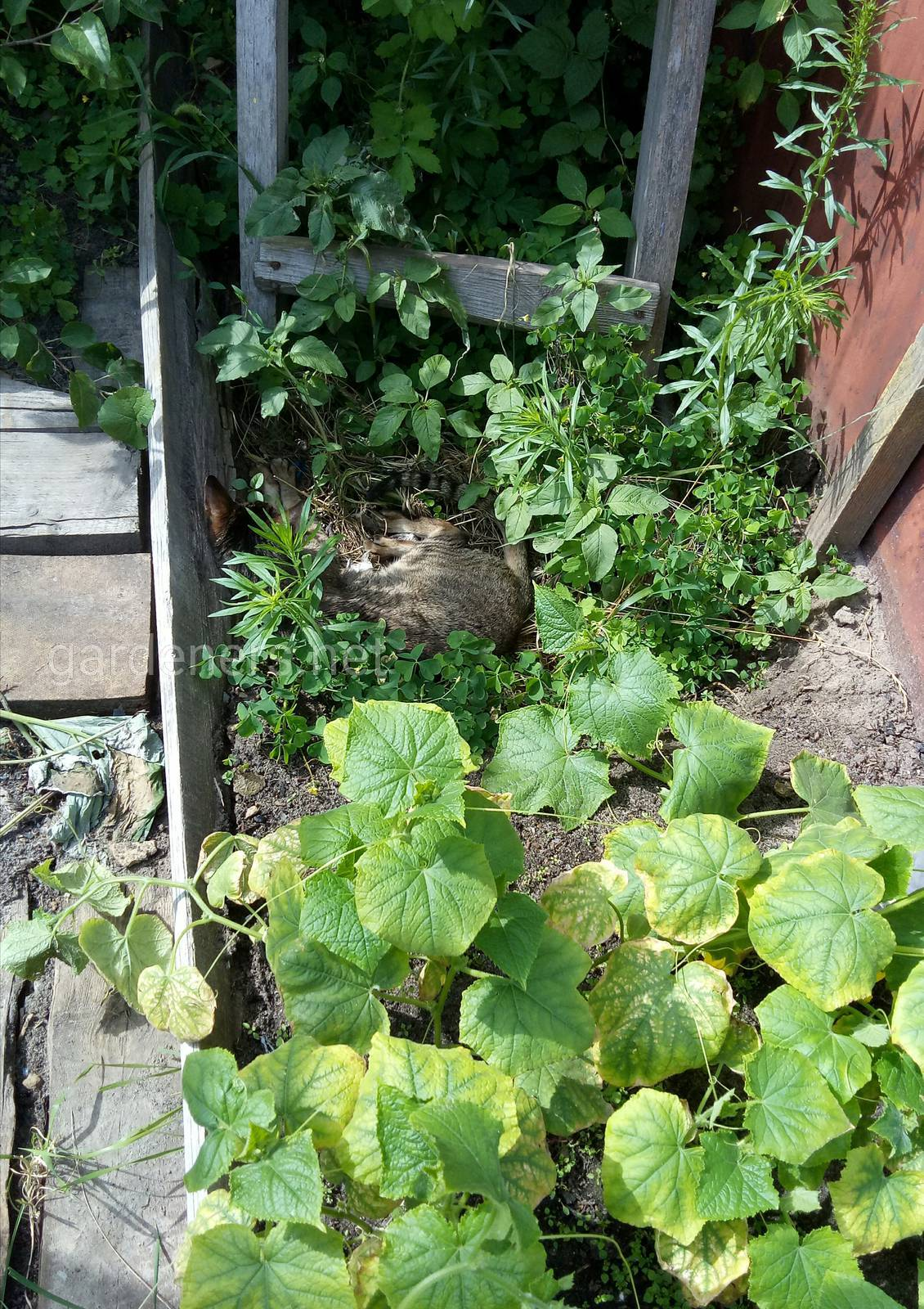 Квест - найди кота