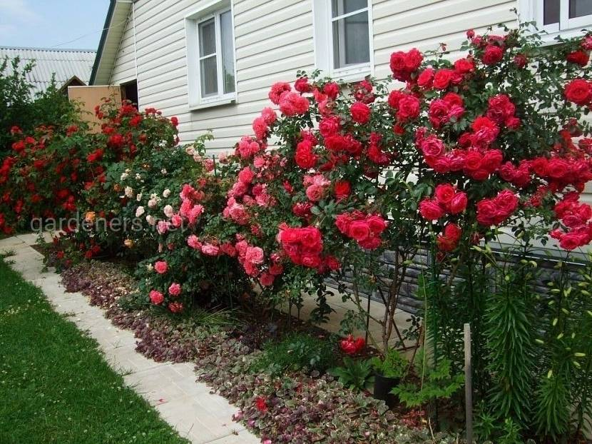 Растения для посадки вдоль дома