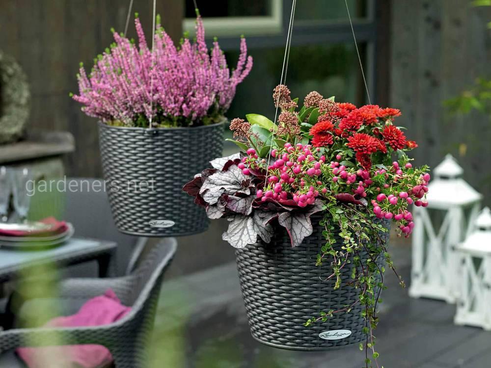 Растения в кашпо-корзине