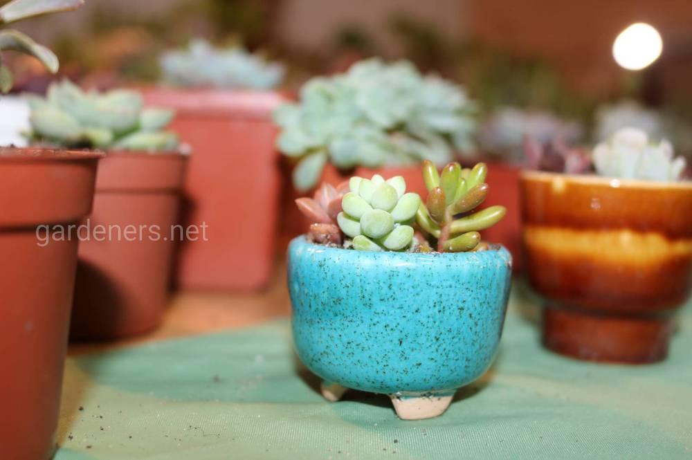 Співвідношення розмірів кашпо і рослин