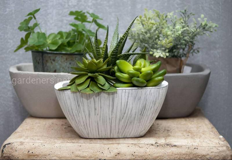 Як доглядати за кімнатними рослинами в лютому?
