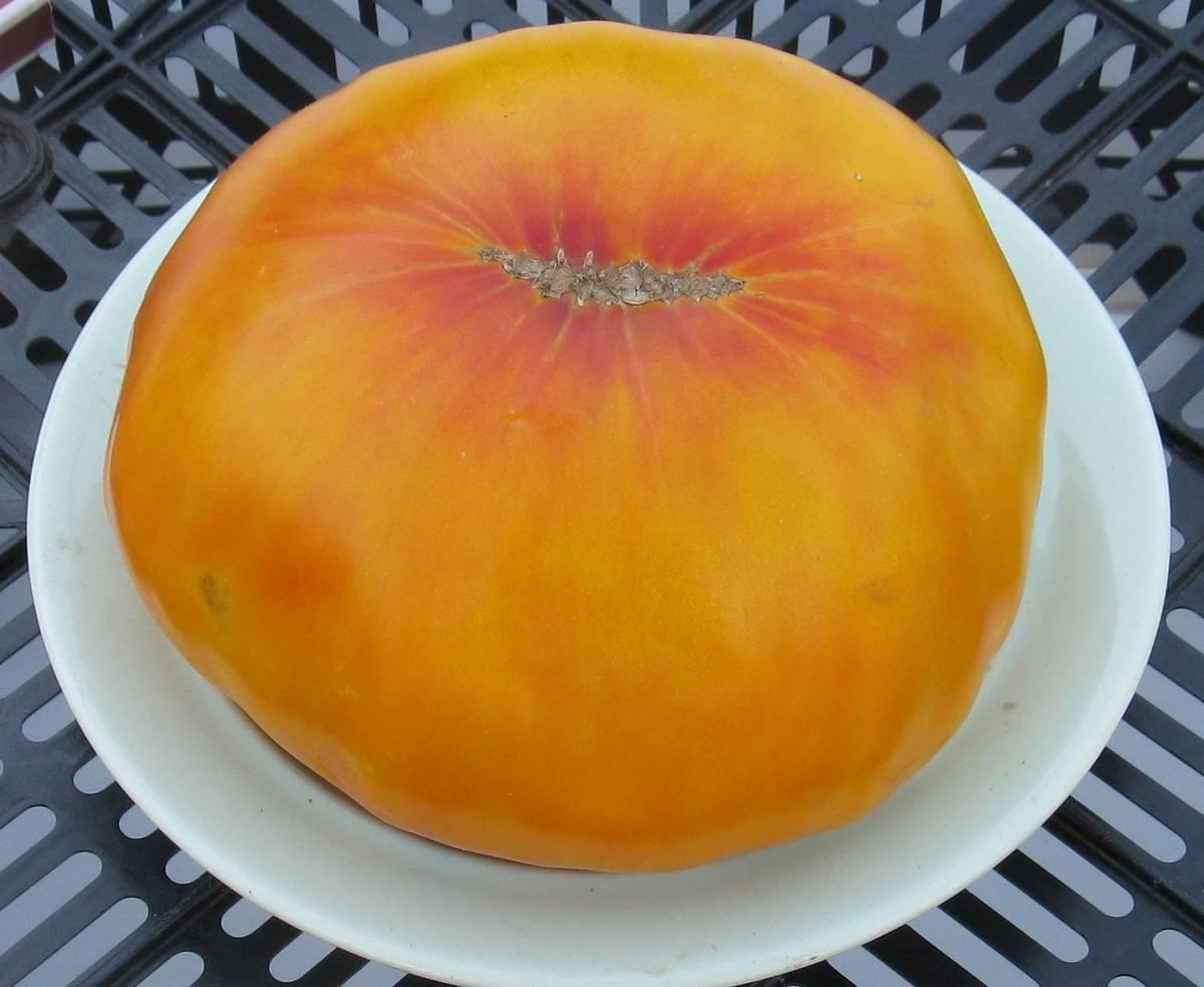 Сорт томата Гавайский ананас