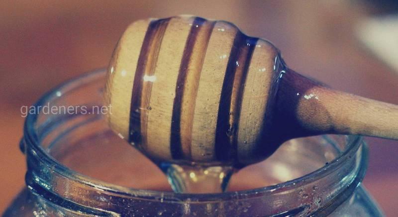 Мёд из кандыка