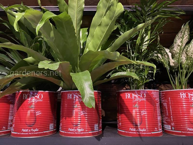 Повторное использование упаковки. Банки из-под томатной пасты  ROSSO стали домом для цветов