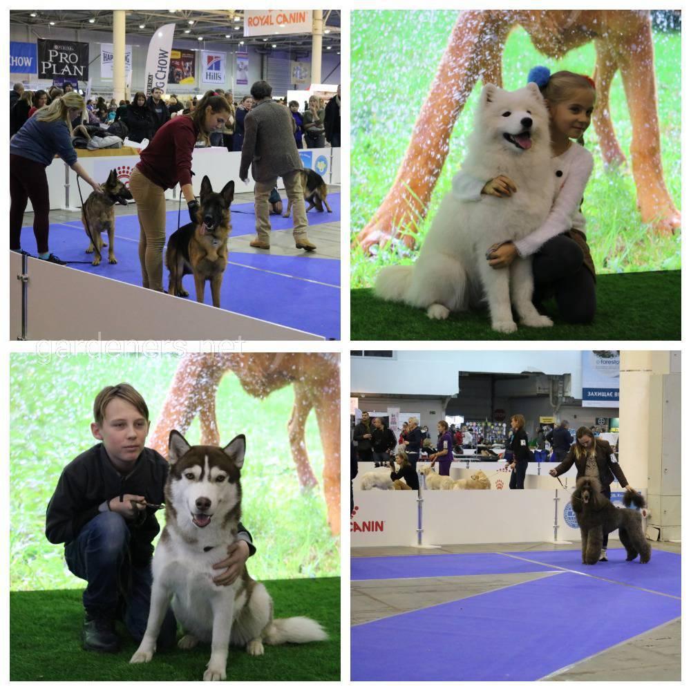 8-9 грудня 2018 року на Міжнародній виставці собак усіх порід