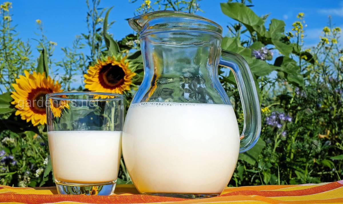 Молочные бактерии против садовых болезней