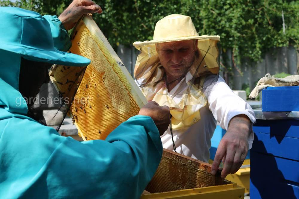 Мед для человека является источником витаминов