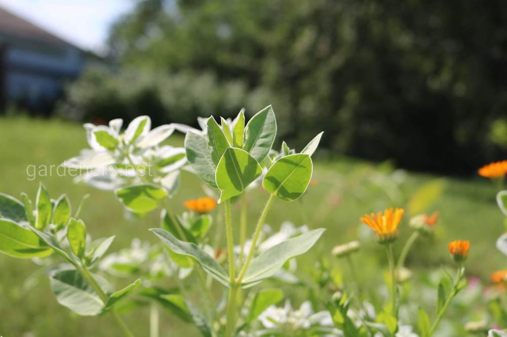 Высоко кислые почвы также могут быть токсичными