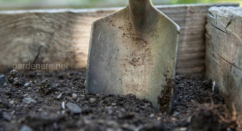 Грунт для посева семян на рассаду
