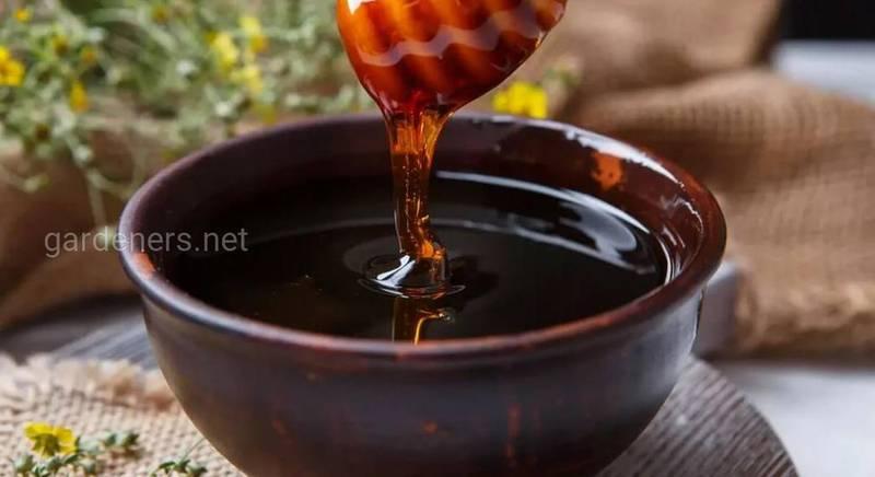 Смачний і корисний мед з рослин дягілю