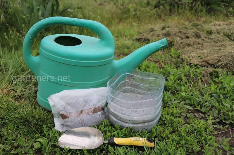 Почему кальций в почве является чрезвычайно важным элементом?