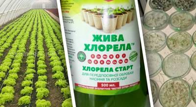 Передпосівна обробка насіння