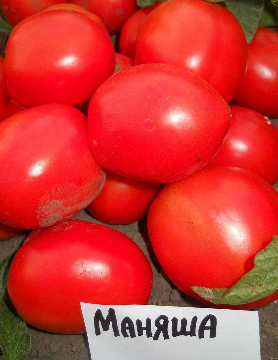 Сорт томата Маняша